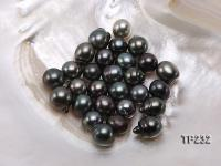Tahitian Pearl--Top Grade AAA 12X13-13X16mm Natural Black Near Round Pearl  TP232
