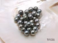 13-14mm Black Round Loose Tahitian Pearls  TP238