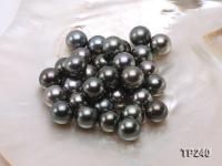 14-15mm Black Round Loose Tahitian Pearls  TP240