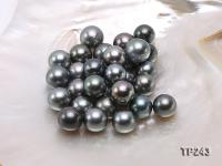 14.5-15.5mm Black Round Loose Tahitian Pearls  TP243