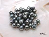 12-13mm Black Round Loose Tahitian Pearls  TP244