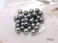 13-14mm Black Round Loose Tahitian Pearls  TP247