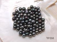 9-10mm Black Round Loose Tahitian Pearls  TP250