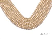 Wholesale 6mm Round Golden Seashell Pearl String SPS324
