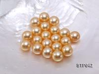 13-14mm Golden Round South Sea Pearl  STP042